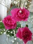 flower10022.jpg